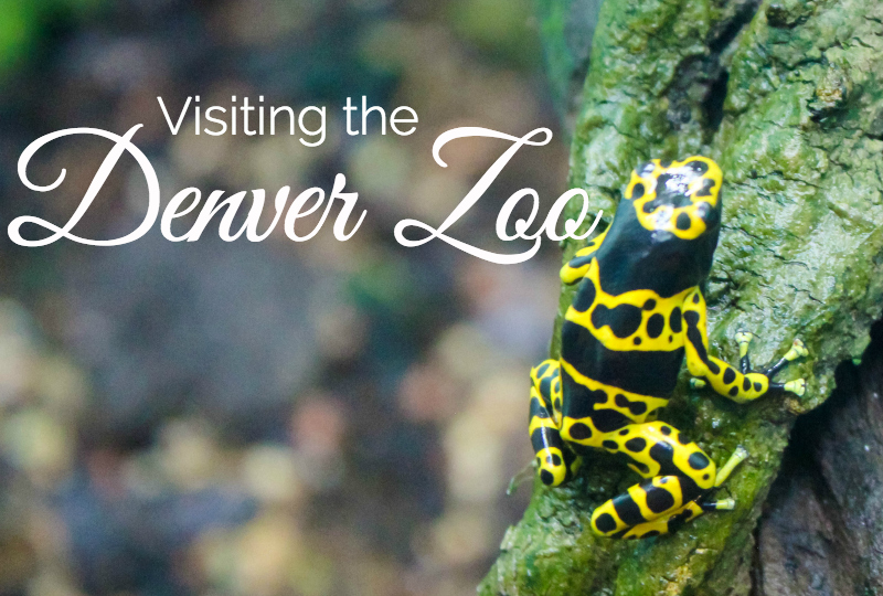 Visiting The Denver Zoo